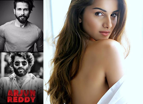 Tara Sutaria to star opposite Shahid Kapoor in Arjun Reddy's remake!