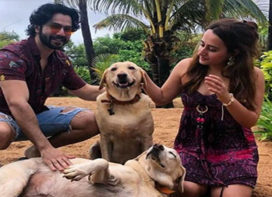 Varun Dhawan and Natasha Dalal to share about their love for dogs!